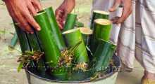 গাইবান্ধায় কাটিং ও কলম পদ্ধতিতে বাঁশ চাষ