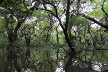 Ratargul-the Swamp forest