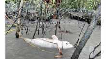 Our Sundarban crying