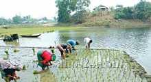 দুর্গাপুরে বোরো চাষে কৃষকদের ব্যস্ততা