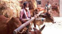 ইরির বাম্পার ফলন সত্বেও দুশ্চিন্তায় কৃষক