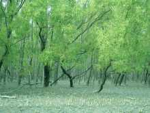 Sundarban:World largest mangrove  forest